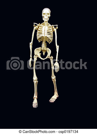 squelette - csp0197134