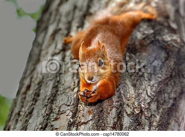 Squirrel hanging on a tree - csp14780062