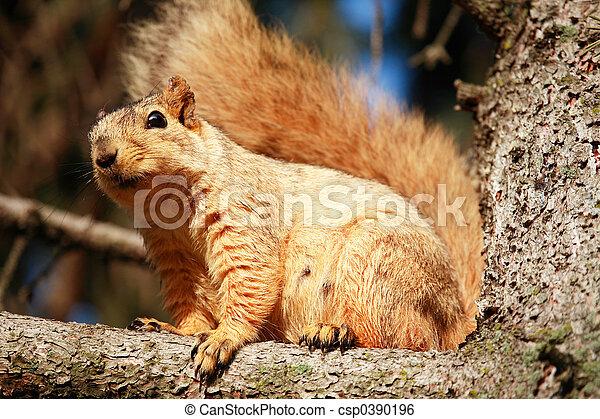 Squirrel in Tree - csp0390196