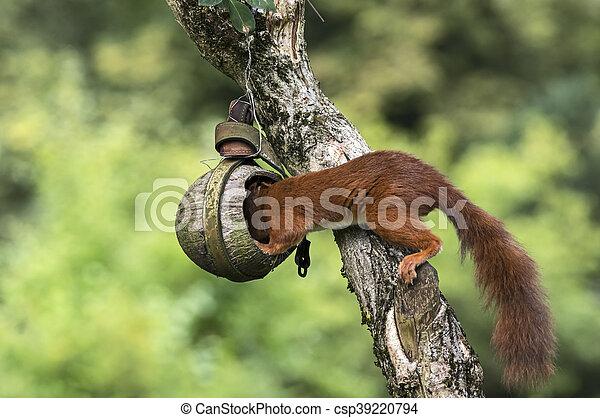 Squirrel on a bird feeder - csp39220794