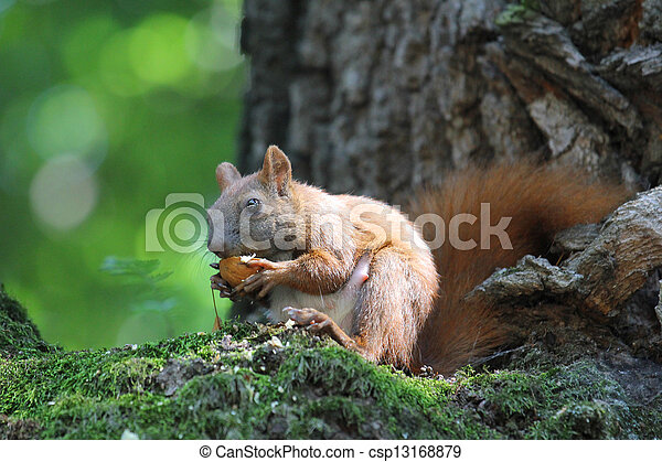 squirrel on a tree - csp13168879