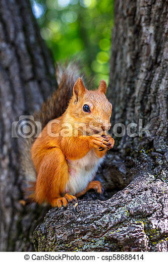 squirrel on a tree - csp58688414