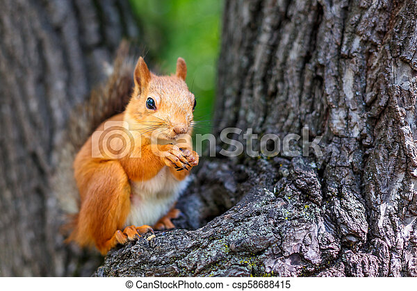 squirrel on a tree - csp58688415