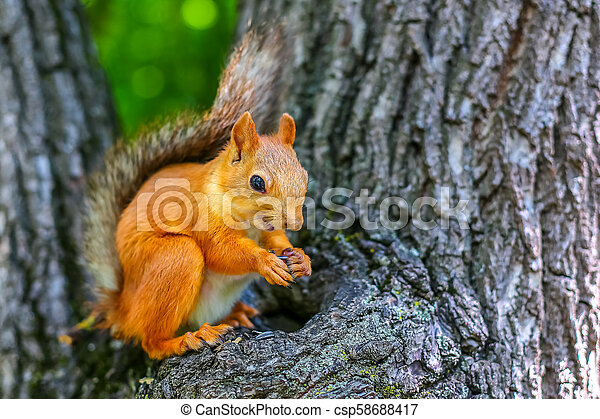 squirrel on a tree - csp58688417
