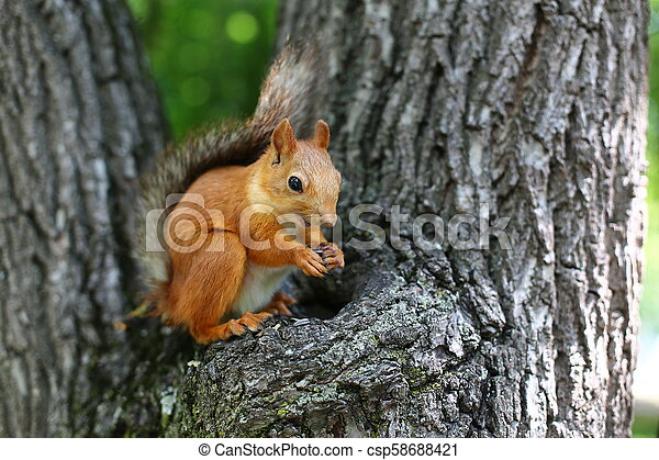 squirrel on a tree - csp58688421