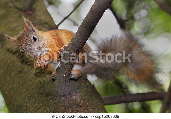 Squirrel on a tree - csp15203609