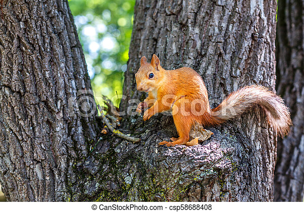squirrel on a tree - csp58688408