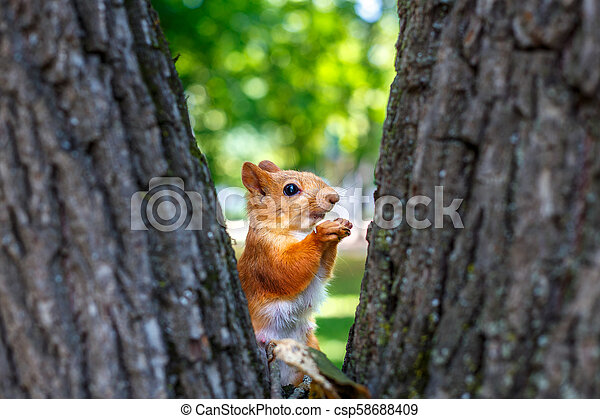 squirrel on a tree - csp58688409