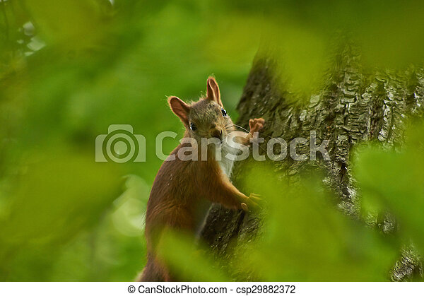 Squirrel on a tree trunk in the forest. - csp29882372