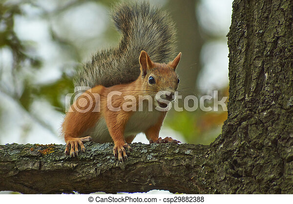 Squirrel on a tree trunk in the forest. - csp29882388
