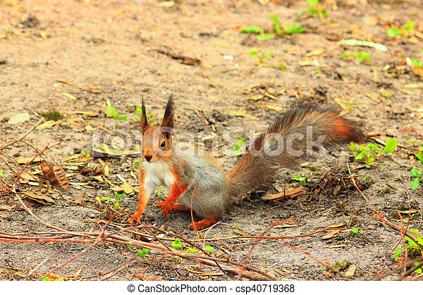 squirrel on the ground - csp40719368