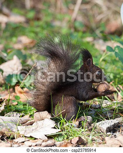 Squirrel - csp23785914