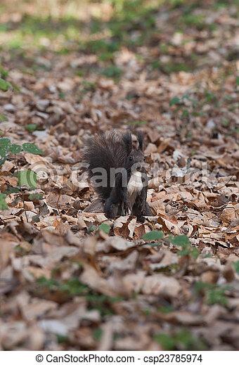 Squirrel - csp23785974