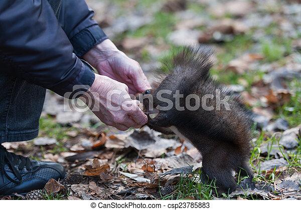 Squirrel - csp23785883