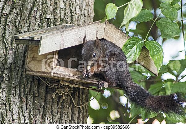 Squirrel plunders a birdfeeder - csp39582666