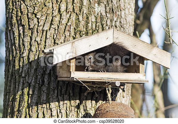 Squirrel sitting on a bird seeder - csp39528020