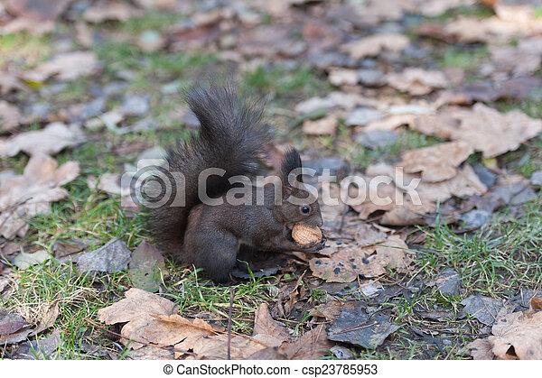 Squirrel - csp23785953