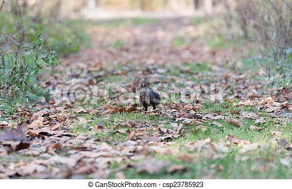 Squirrel - csp23785923