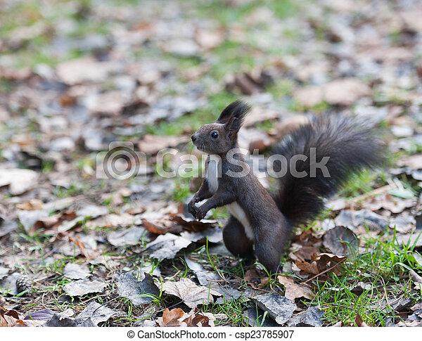 Squirrel - csp23785907