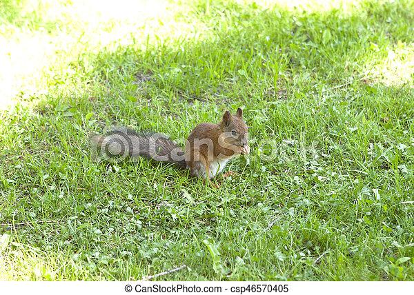 squirrel - csp46570405