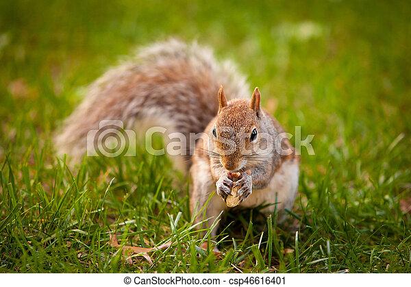 Squirrel - csp46616401