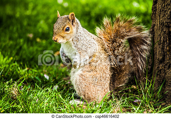 Squirrel - csp46616402