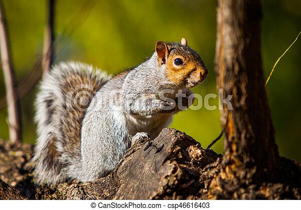 Squirrel - csp46616403