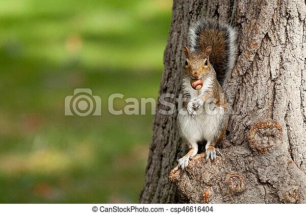 Squirrel - csp46616404