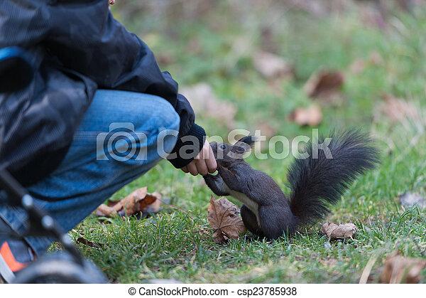 Squirrel - csp23785938