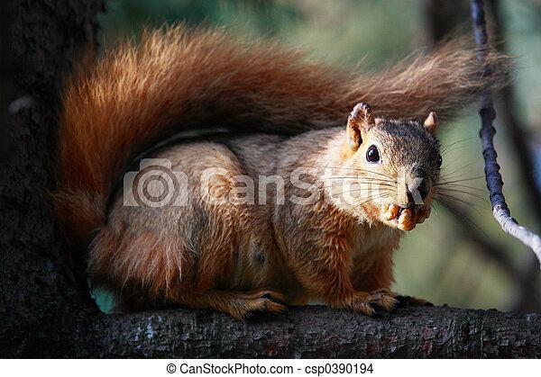 Squirrel with Nut - csp0390194