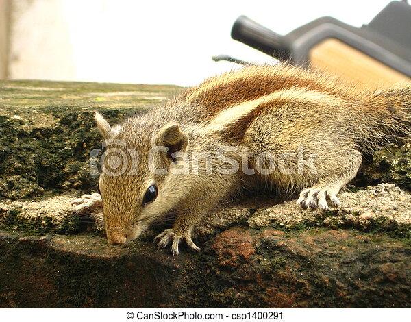squirrels - csp1400291