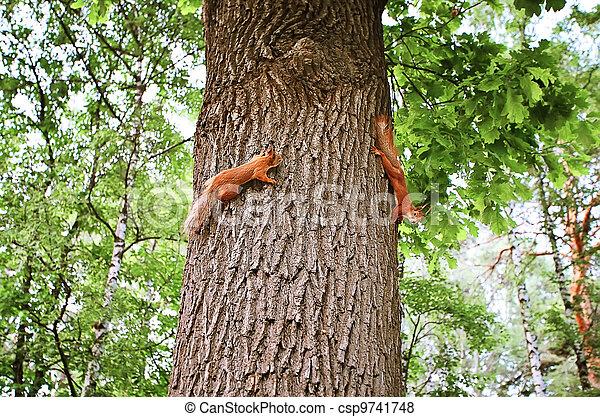 squirrels - csp9741748