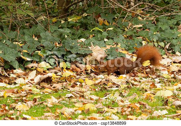Squirrels - csp13848899