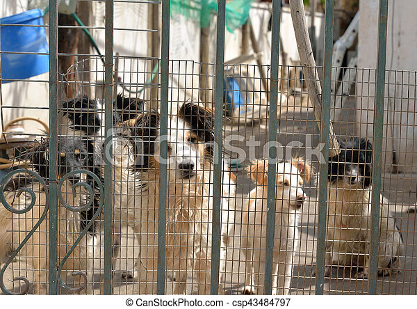 Hunde hinter Gittern. - csp43484797