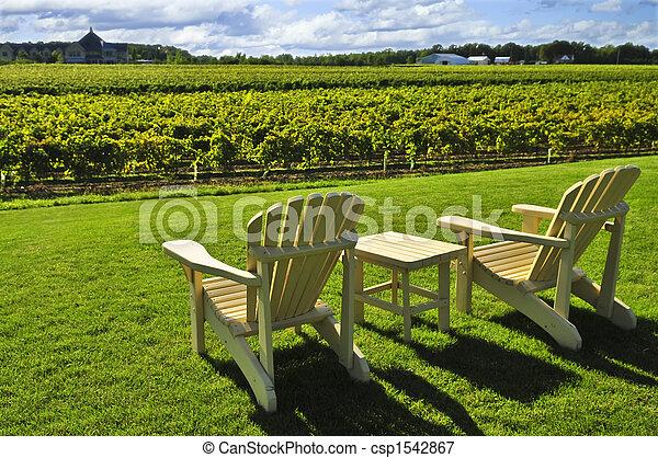 stühle, weinberg, zugewandt - csp1542867