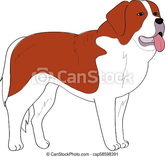 st bernard dog hand drawing vector