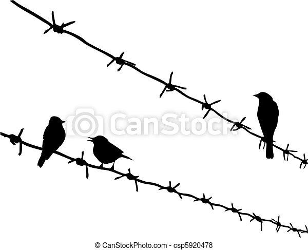 Stacheldraht, silhouette, drei, vektor, vögel.