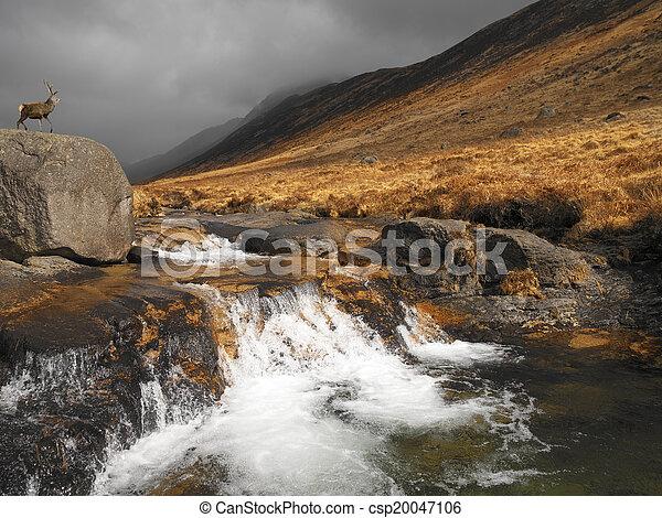Stag in Glen Rosa - Isle of Arran - Scotland - csp20047106