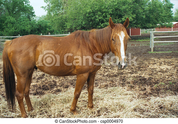 Standing Horse - csp0004970
