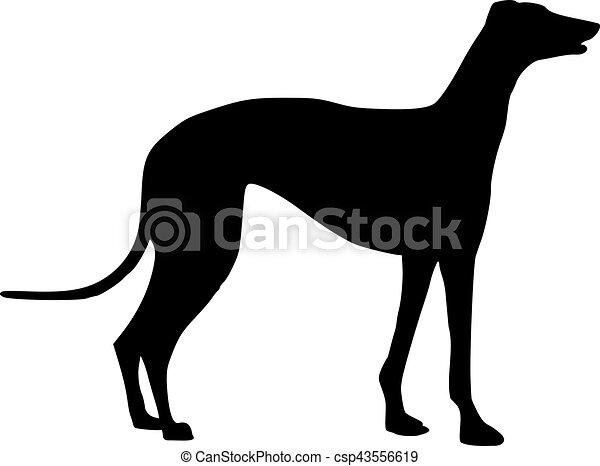 standing, levriero, silhouette, cane - csp43556619