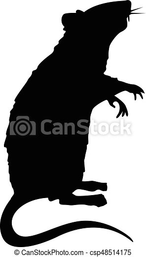 standing, ratto, silhouette - csp48514175