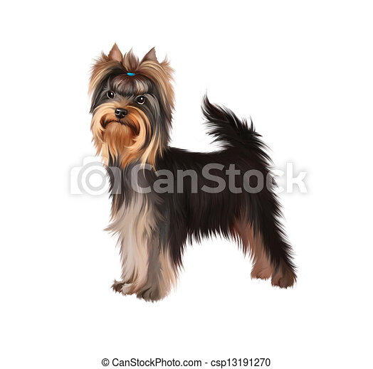 Standing Yorkshire Terrier Isolated Illustration On White