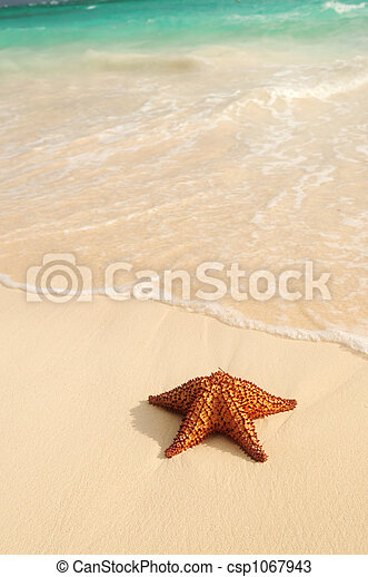 Starfish and ocean wave - csp1067943