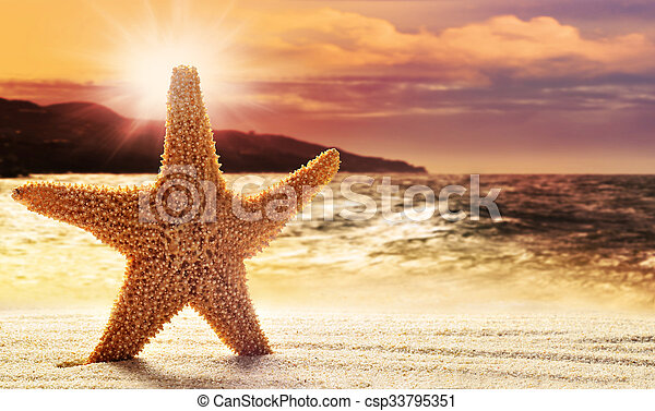 Starfish in sand on the beach - csp33795351
