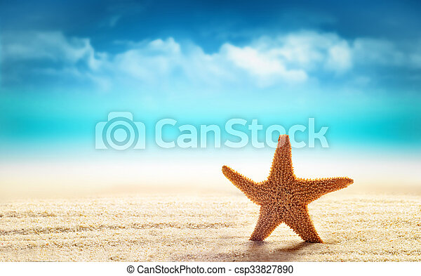 Starfish in sand on the beach - csp33827890