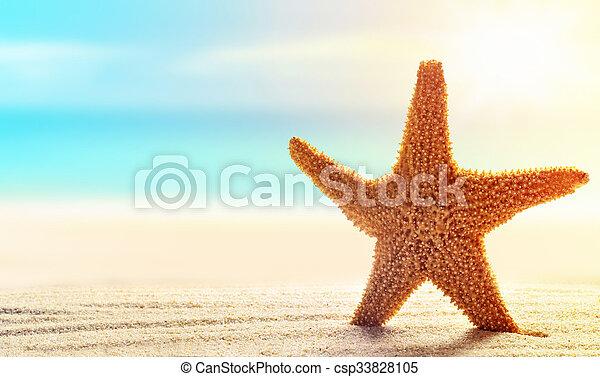 Starfish in sand on the beach - csp33828105