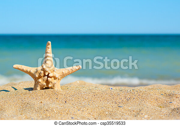 Starfish in sand on the sea side - csp35519533