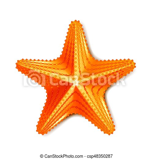 Starfish isolated on white vector - csp48350287