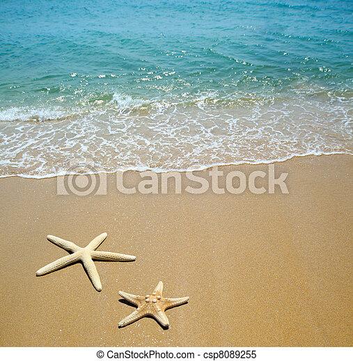 starfish on a beach sand - csp8089255