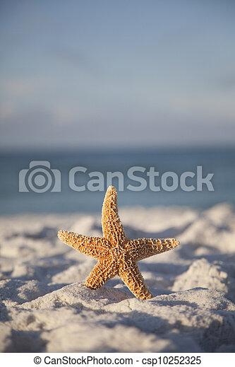 Starfish on the Beach - csp10252325